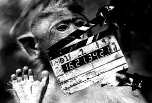 Joku klaffaa apinan naamalle.